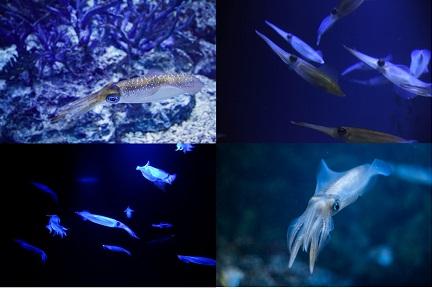イカの種類