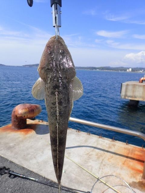 堤防釣りマゴチ