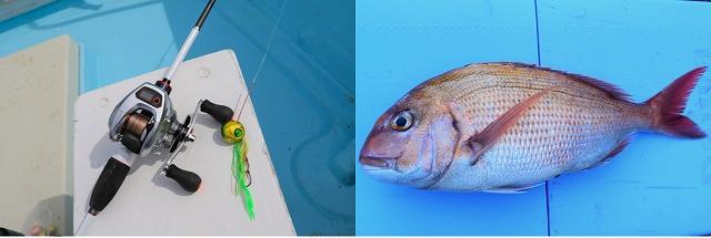 タイラバでマダイを釣る