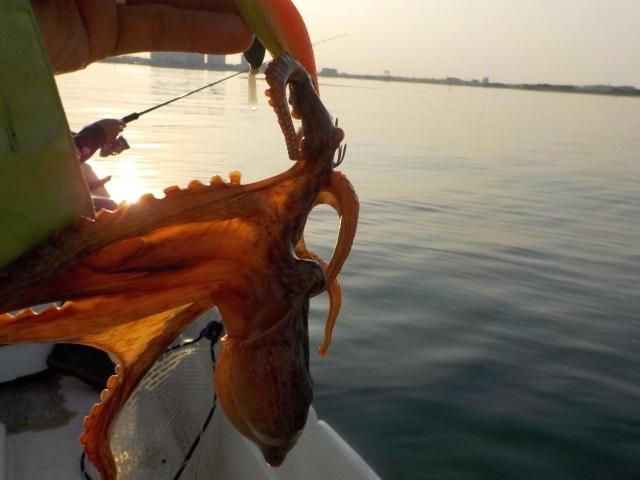 タコが釣れる時間帯