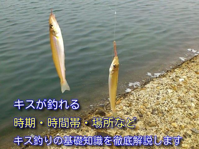 キス釣り 時期 タイトル