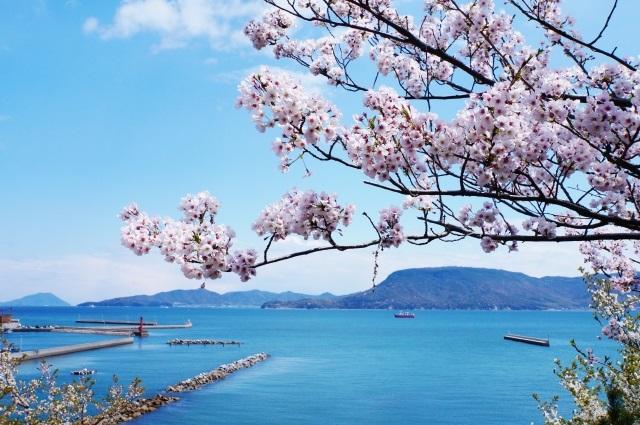 春の海 桜と海