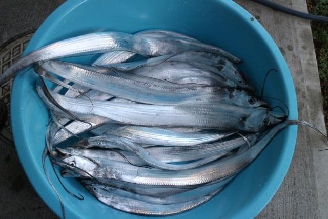 タチウオ オフショアジギング 釣果