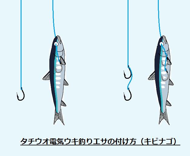 タチウオ 電気ウキ釣り エサの付け方 キビナゴ